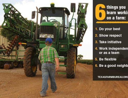 6 things you can learn working on a farm