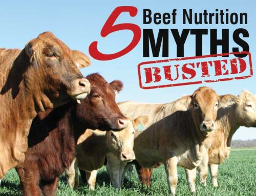 Busting myths about beef nutrition