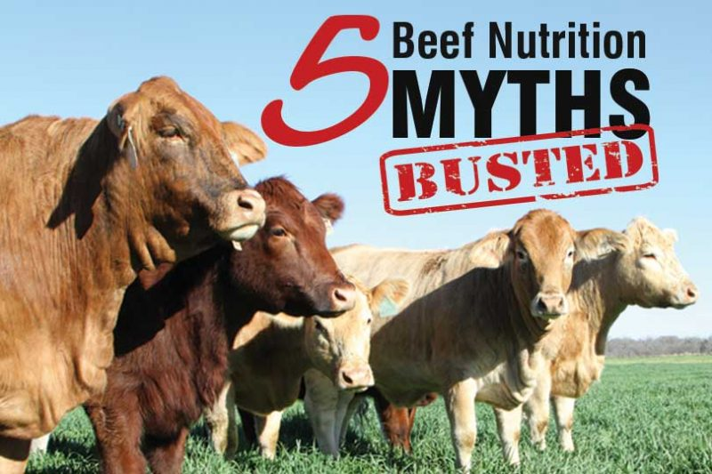 beef nutrition myths