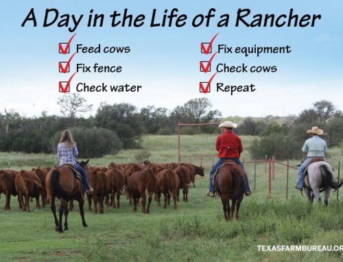 How to feel like a rancher