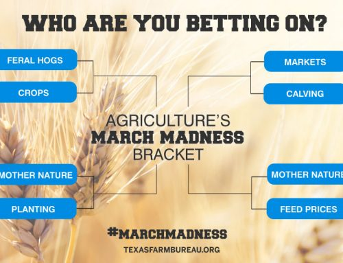 March Madness: Agriculture busting brackets