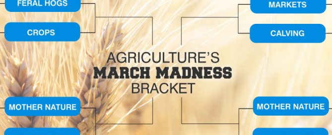 march madness_agriculture's bracket