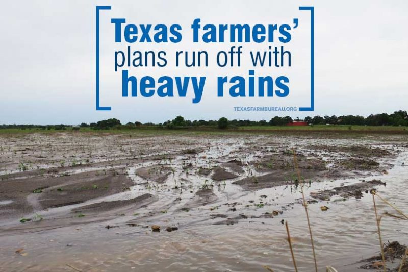 Mother Nature has proven to be a challenging business partner this spring. Continuous ranis, hailstorms, flooding and tornadoes have impacted Texas farmers and ranchers, Justin Walker says on Texas Table Top.