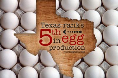 Texas egg production