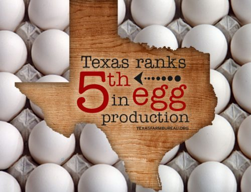 National Egg Month is egg-citing!