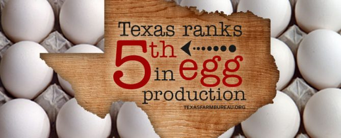 Texas egg production