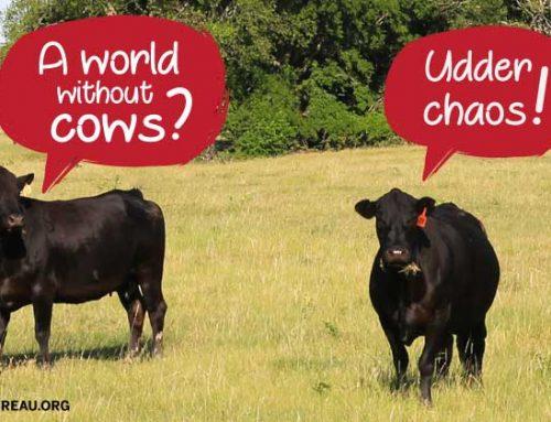 Texas brings the beef