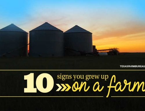 10 signs you grew up on a farm