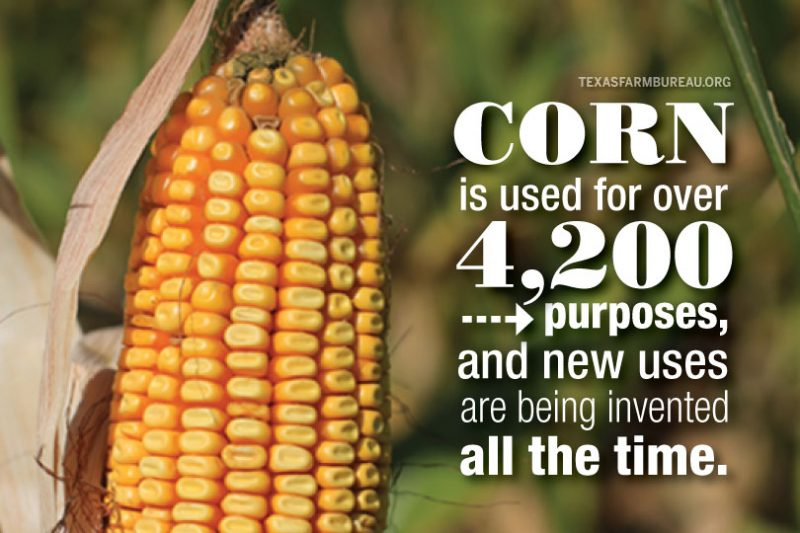 Corn has more than 4,200 different uses! Learn how it gets from field to table and home to business to vehicle—and pretty much everywhere in between—on Texas Table Top.