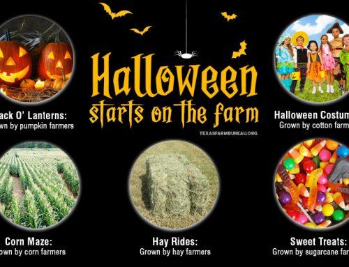 Halloween starts on the farm