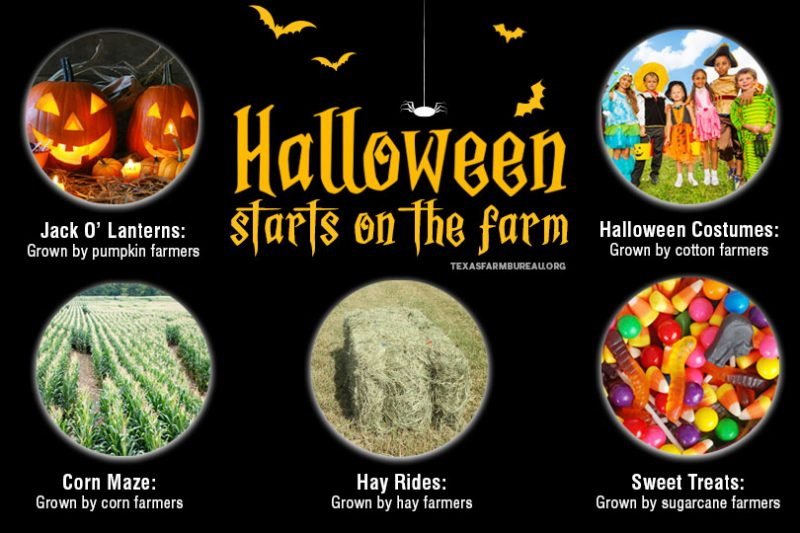 From pumpkins to sweet treats and costumes to hay rides, Halloween festivities get their start on Texas farms and ranches.