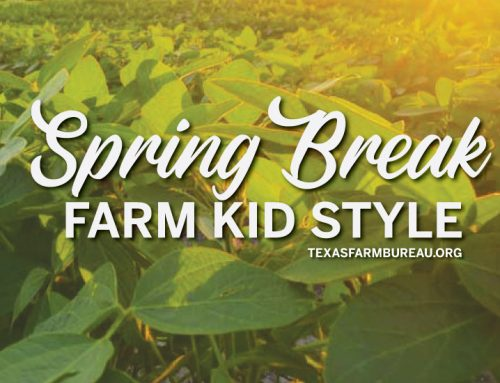 Spring break—farm kid style