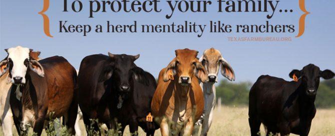 Herd health practices prevent disease