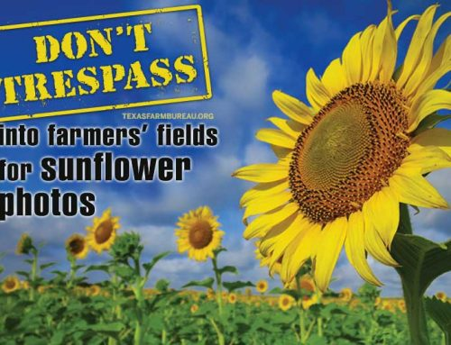 Don't go wild taking sunflower photos