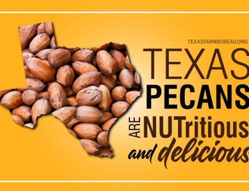 NUT-ritious and delicious Texas pecans