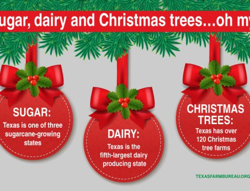Super Christmas ag facts