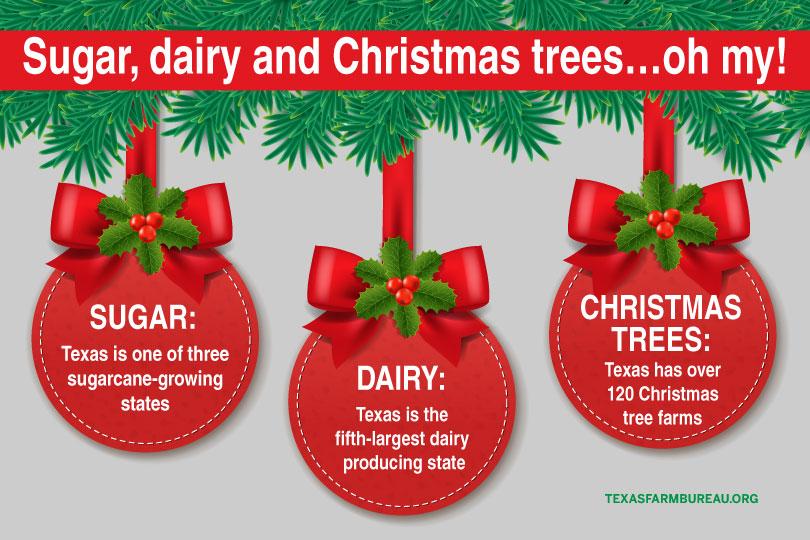 Sugarcane, Christmas tree farms, dairy