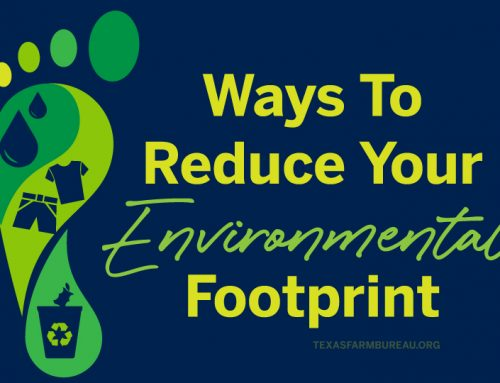 Ways to reduce your environmental impact