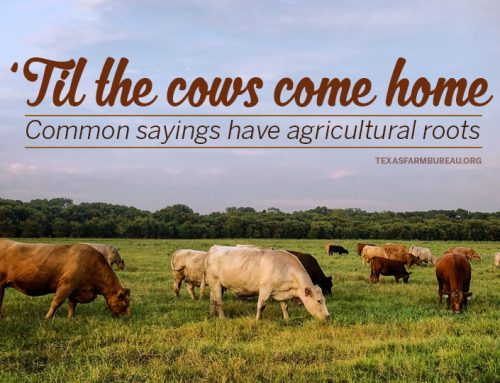 Common sayings rooted in farm wisdom