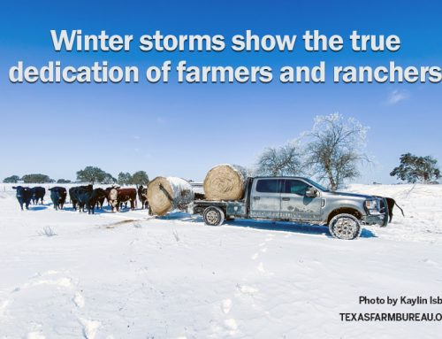 Farmers, ranchers face brutal winter storm