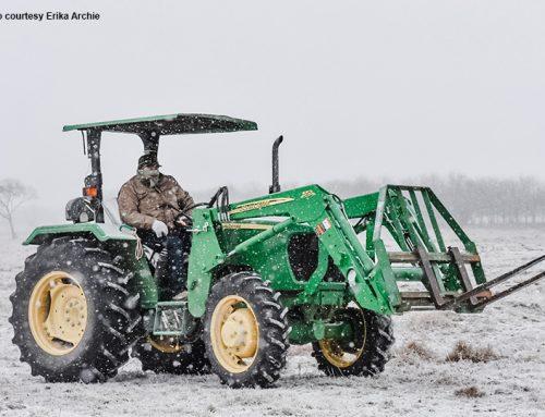 Winter storm devastates Texas agriculture
