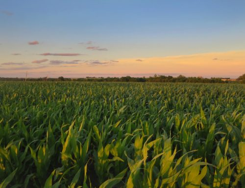 Agriculture is sustainable on Earth Day and every day
