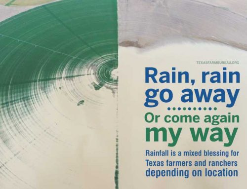 Rain falls across Texas, but is it too much?