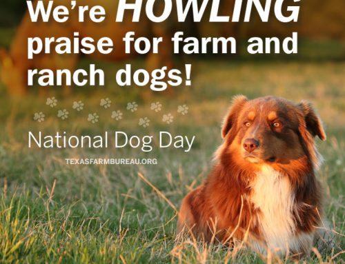 Furever faithful: An ode to farm dogs
